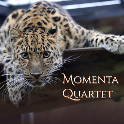 Momenta - Visiting Artist Series