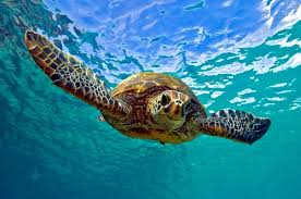 Tropical Marine Conservation: Travel Winter Study Info Session Sept. 23, 7 pm