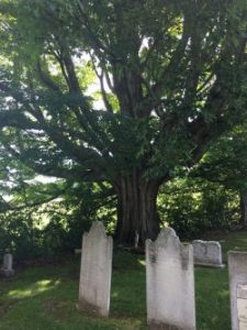 """WOC and WRLF present """"a Layman's History of Williamstown's Trees"""" on 1/18 at  11 am in Paresky Aud."""